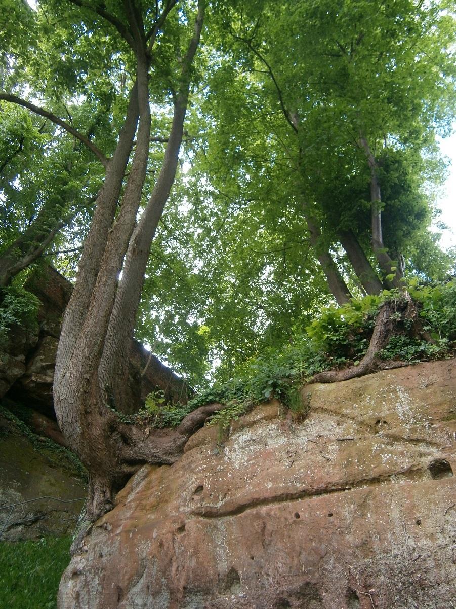 rots waarop wij bouwen