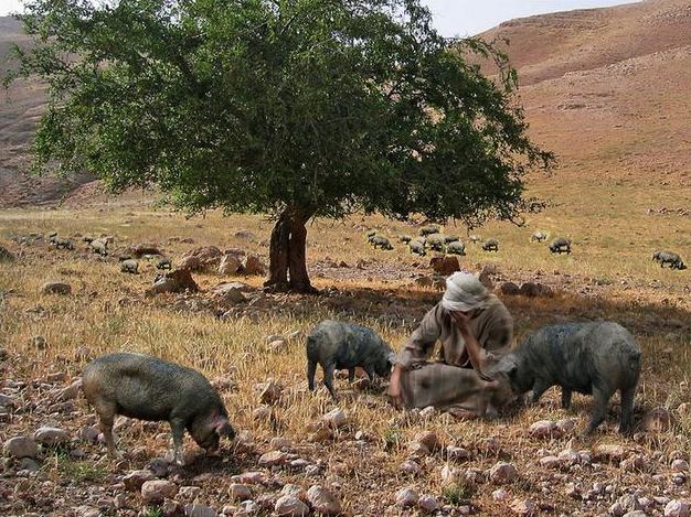 De verloren zoon kwam tot inkeer en berouw bij de varkens