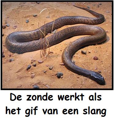 De zonde werkt als het gif van een slang