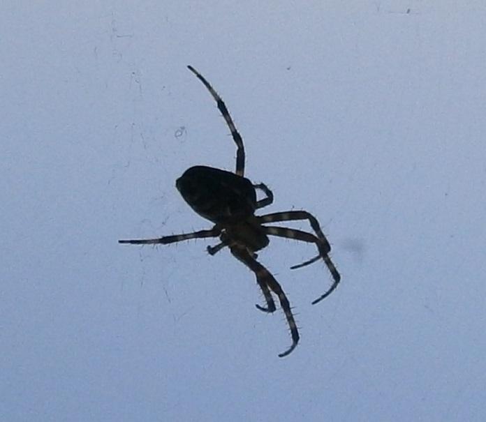 Demonen werken op geestelijk gebied als spinnen. Probeer de identiteit en de activiteiten te herkennen.