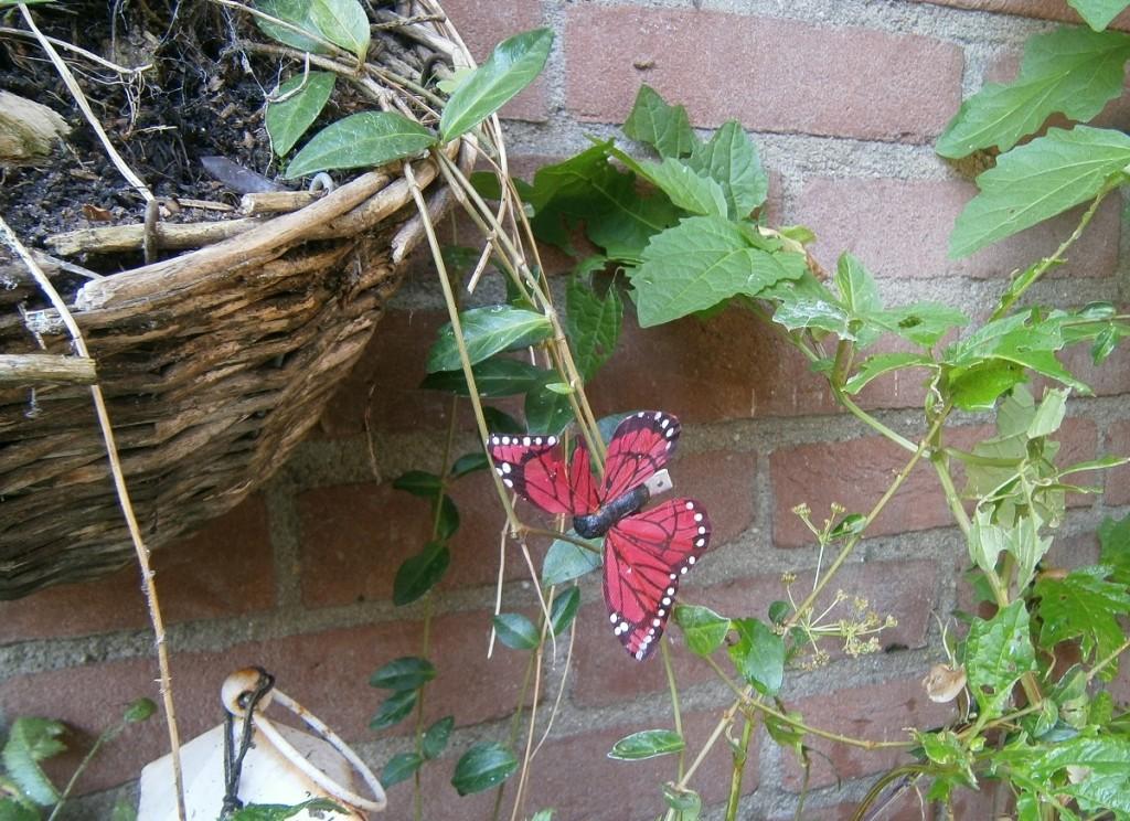 Een vlinder moet geen muurbloempje zijn, maar moet in vrijheid leren leven.