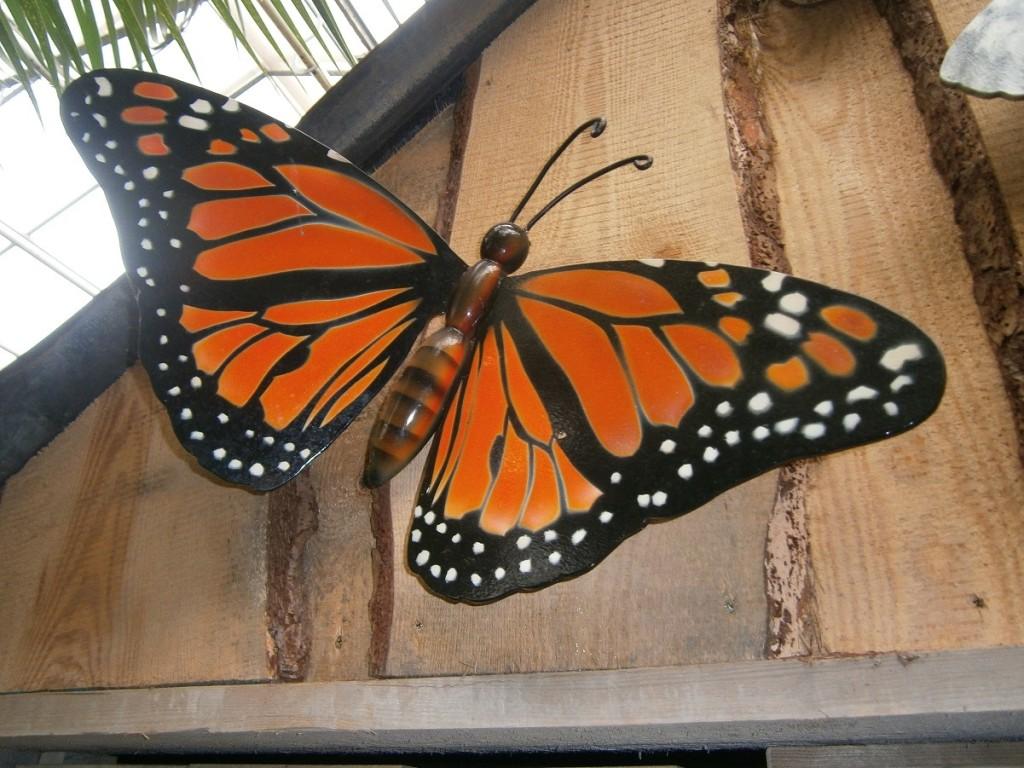 Hoe heeft een rups zich tot een imago van een prachtige vlinder kunnen ontwikkelen? Hebben wij ons als gelovige ook zo kunnen ontpoppen, met een herkenbaar volwassen imago?
