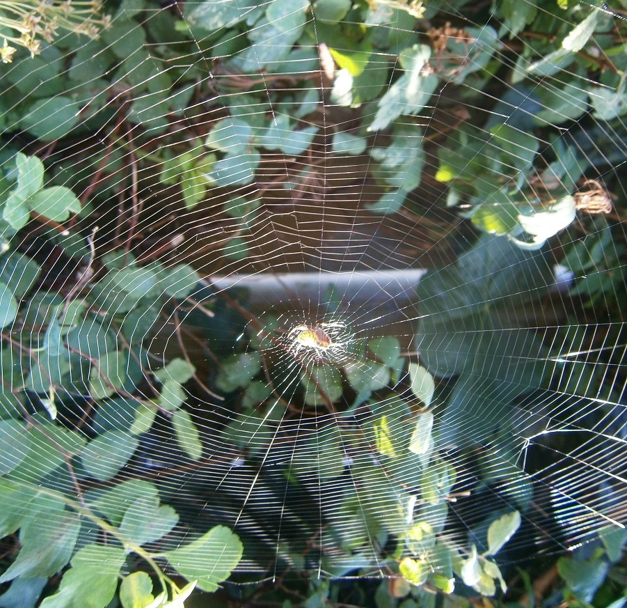 Pas op voor het web van de bloeddorstige spin.