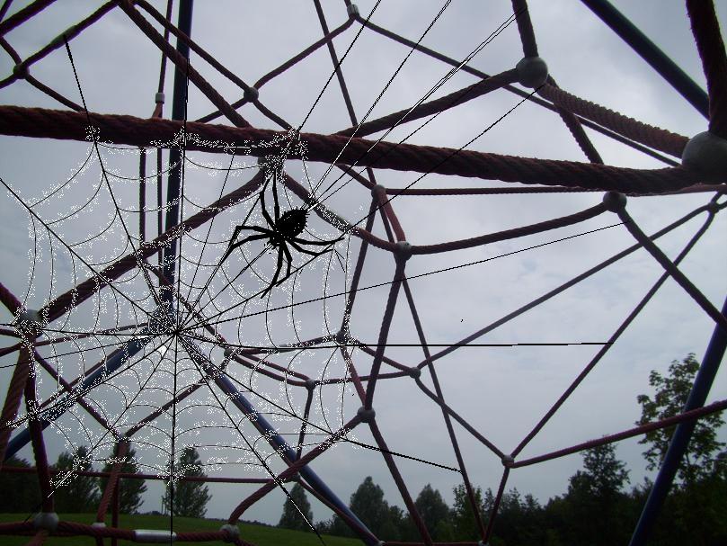Raak niet verstrikt in het netwerk van het world wide web.