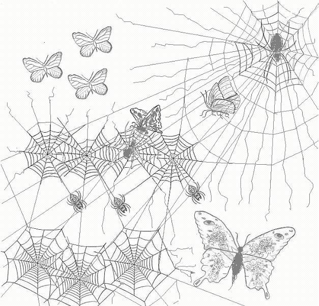 Vlinders worden bedreigd door spinnen. Blijf op een  veilige hoogte in het licht.
