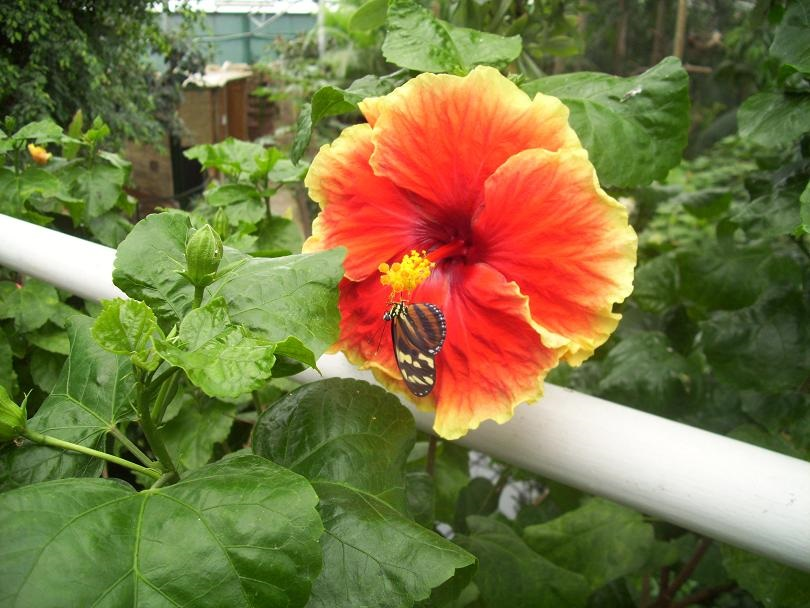 Waarom heeft een vlinder een bloem nodig?