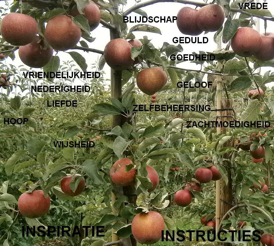 Hoe worden we geestelijk gevoed? Dragen we de goede vrucht van de Geest?