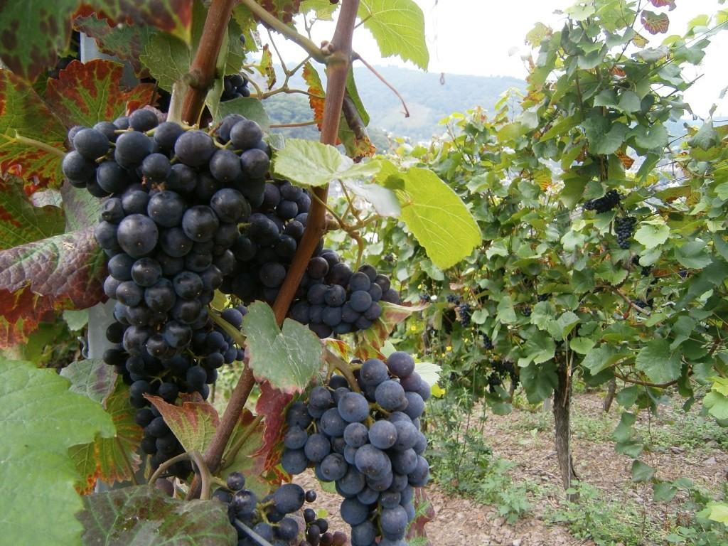Hoe ontvang je overvloedig leven uit de Wijnstok?