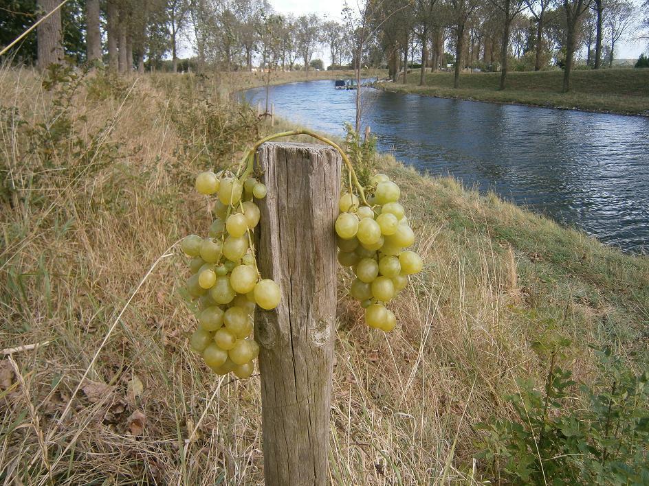 Los van de Wijnstok kunnen we geen vrucht  dragen