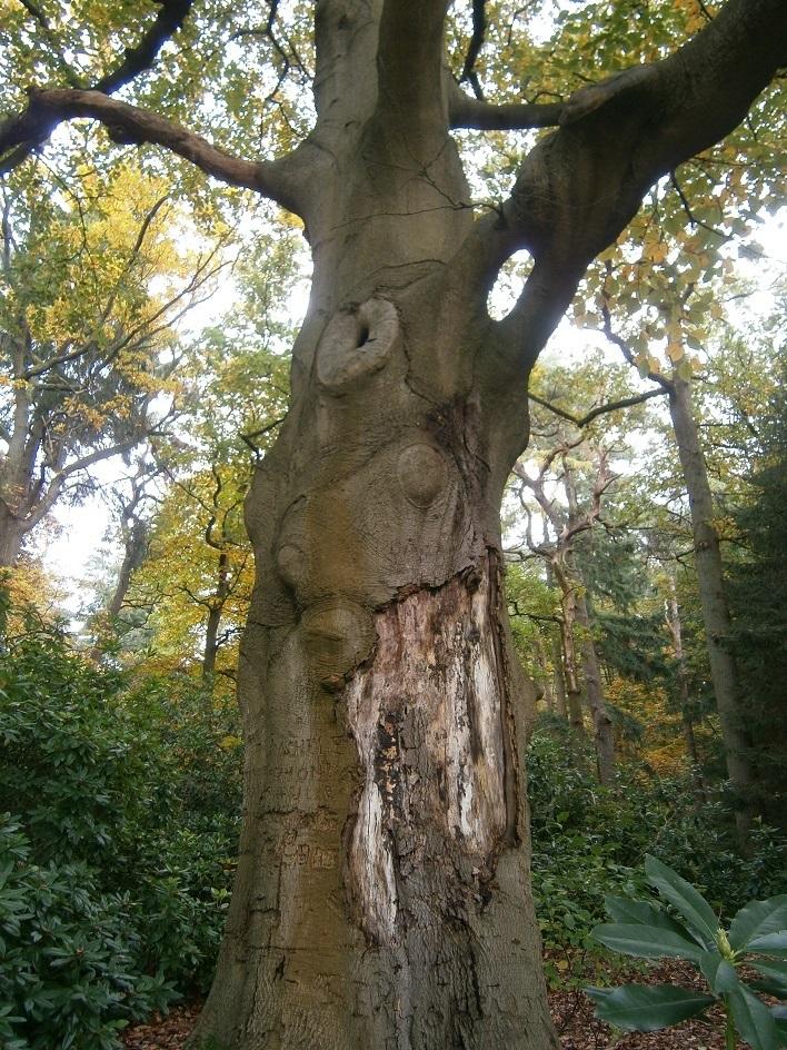 Weardoor zal deze beschadigde boom staande kunnen blijven?