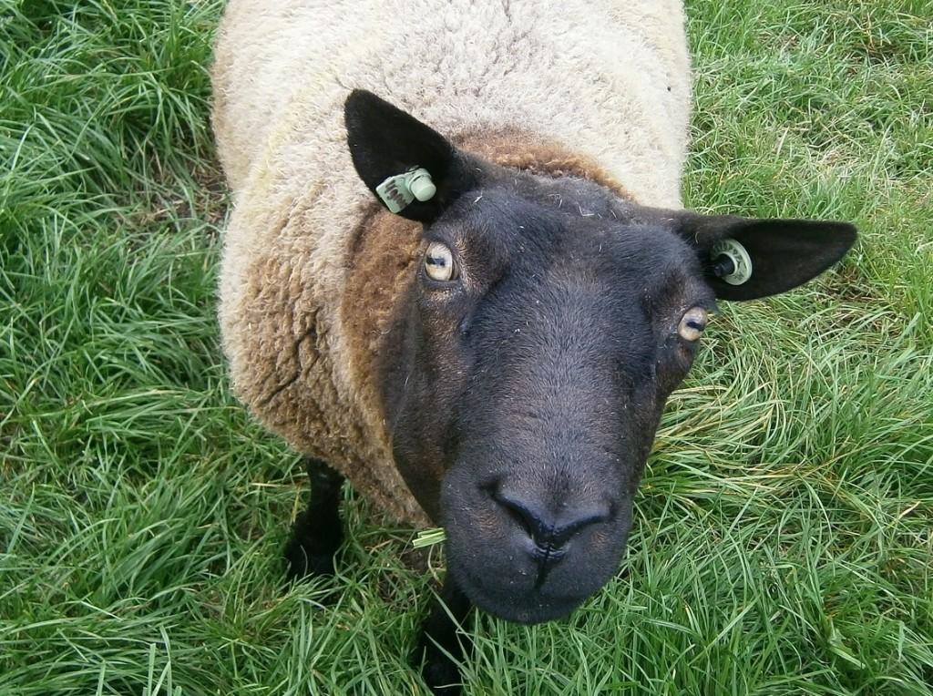 Ben je echt het zwarte schaap, of zit het alleen maar in je hoofd?