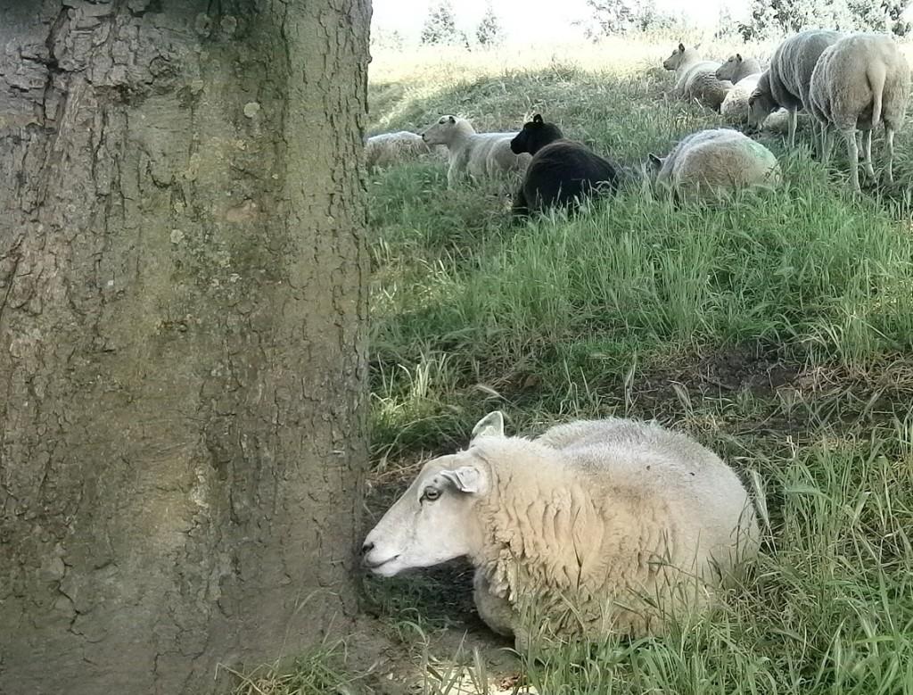 De goede Herder accepteert een afgewezen schaap , die Hem nodig heeft...