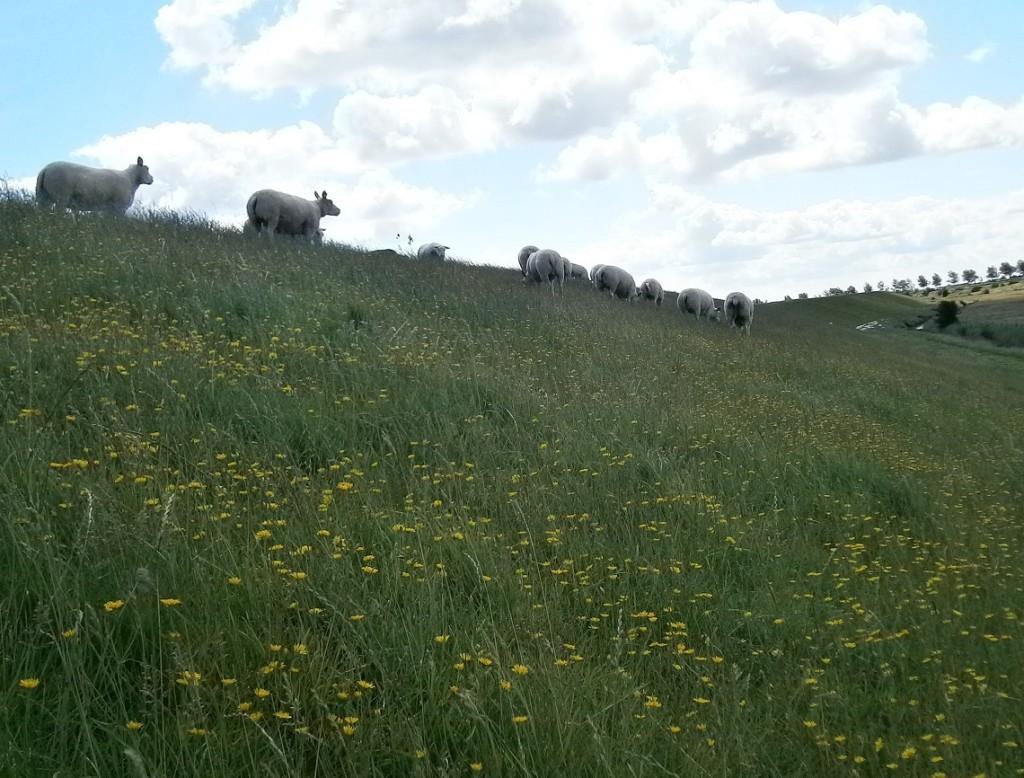 Heb je al een overvloedige weide gevonden bij de schaapskooi van de goede Herder?