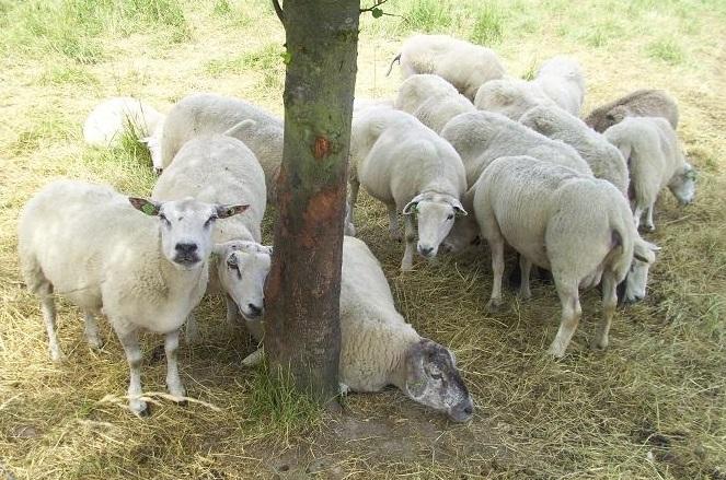 Ik zie je wel. Je bent welkom bij de goede Herder!