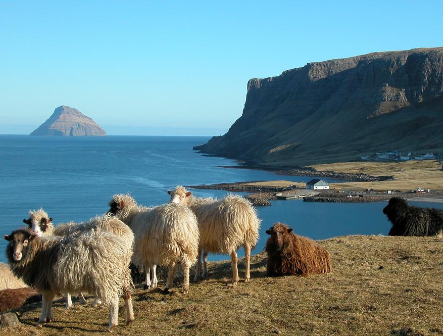 schapen-op-eiland-en-rotsen