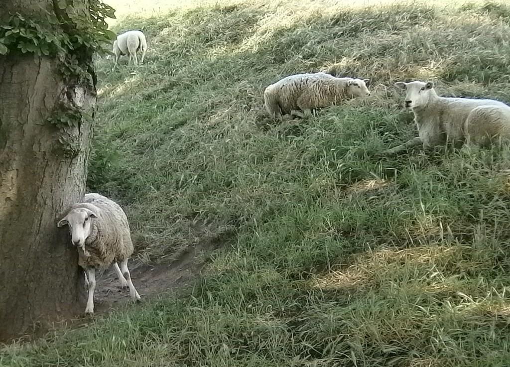 Sta op... en kom tot de Herder, Die je innerlijk kan helen.