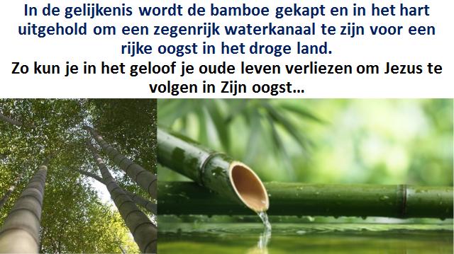 Bamboeverhaal
